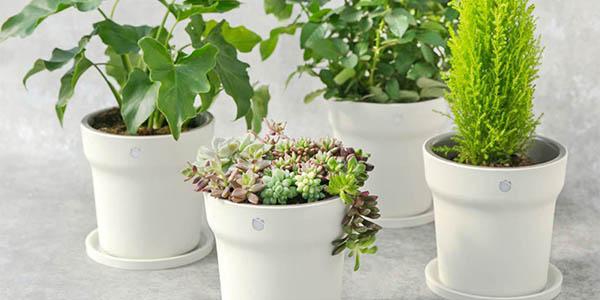 Xiaomi Flora Smart Flower Pot barata