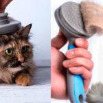 Chollo Cepillo Xiaomi Youpin para mascotas