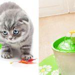 Fuente de agua automática para mascotas Sangemama barata en AliExpress