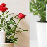 Xiaomi Mi Plant Flower Tester barato